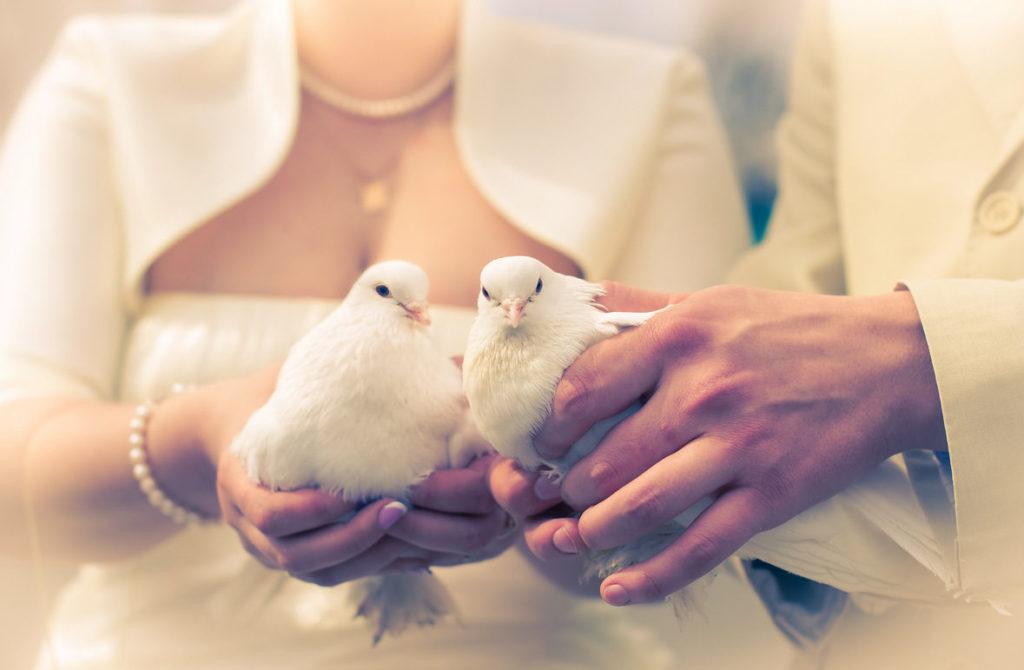 Фото молодоженов с голубями
